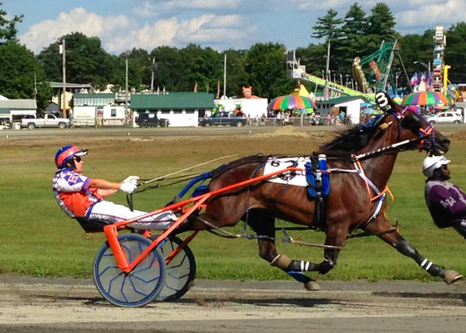 Harness racing today. Pictured is a pacer wearing pacing hopples.