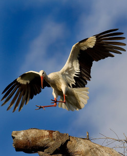 Interesting Facts About Serbia's White Storks