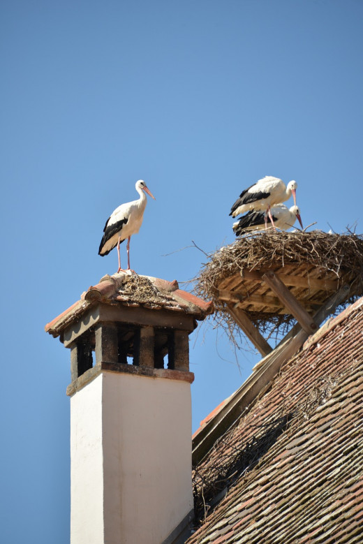 It is a sign of good luck to have a stork build it's nest on the roof of one's home.