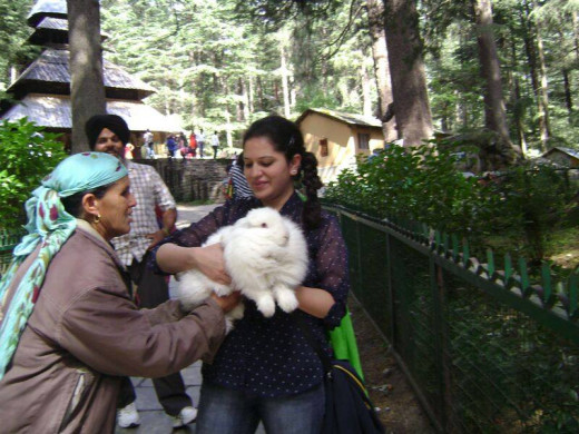 The Angora Rabbits is Manali are damn cute.
