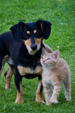 Dogs and Cats are the most popular pets
