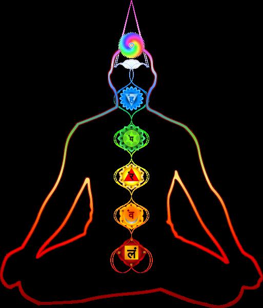 Yoga physiology Seven Chakras of Yoga, By Siddhasana [CC BY-SA 2.5 (htts://creativecommons.org/licenses/by-sa/2.5/)] via Wikimedia Commons