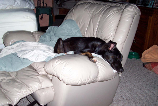 Smells like my Dad so I like to sleep here.
