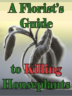 A Florist's Guide to Killing Houseplants