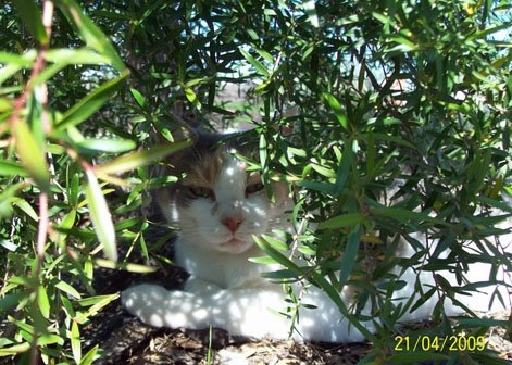 Tia in her free days, under the tea-tree.