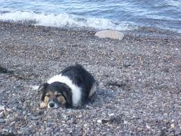 Affected dog