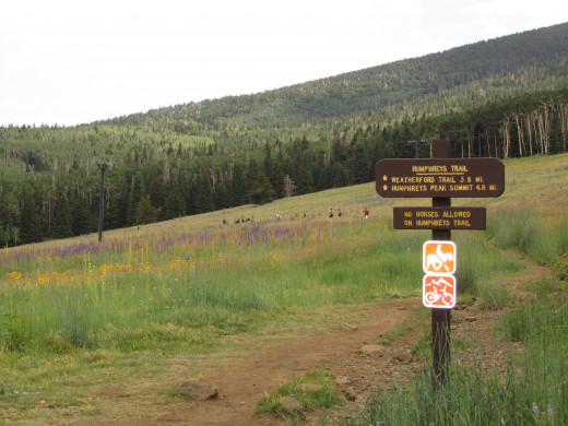 The first part of the trail crosses a steep meadow, which, in the winter, is one of the ski runs at the Arizona Snow Bowl.