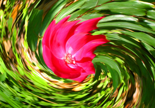 Spinning rose