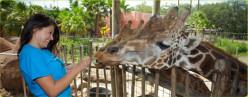 America's Top Zoos