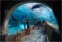 Sea Lion exhibit at St. Louis Zoo