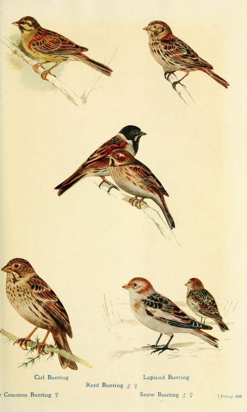 British Birds in their Haunts.