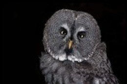 Are you a night owl whether you want to be or not?
