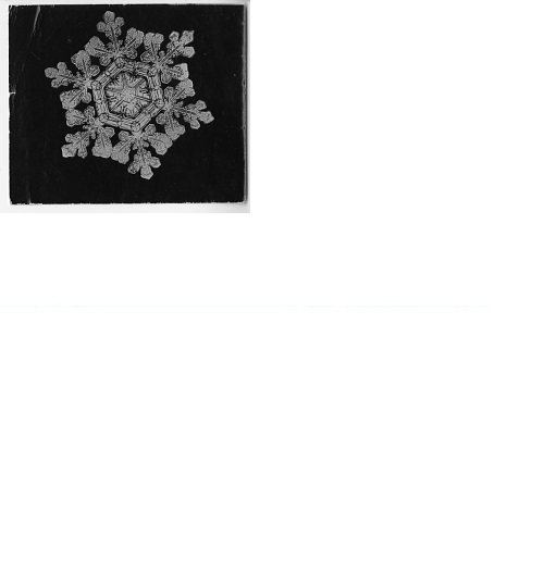 """A """"Dendrite Star"""" Snowflakes Photomicrographed by Wilson A. Bentley, by Bentley, W. A (Wilson Alwyn) 1865-1931, c. 1890, Smithsonian Archives - History Div, SIA2008-1395."""