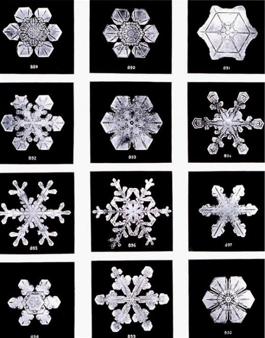 Wilson Bentley Snowflake Photographs