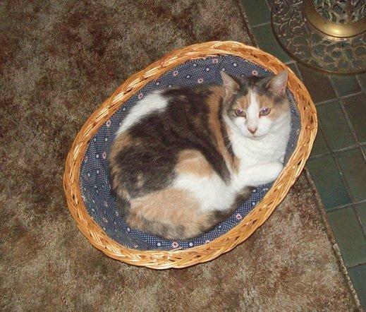 Tia in her basket near the heater.