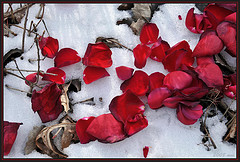 Heart shaped petals in the snow