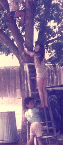 My kids climbing a tree.