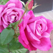 Lisa Morozin profile image