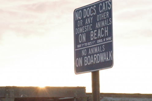 No Pets Allowed On The Beach