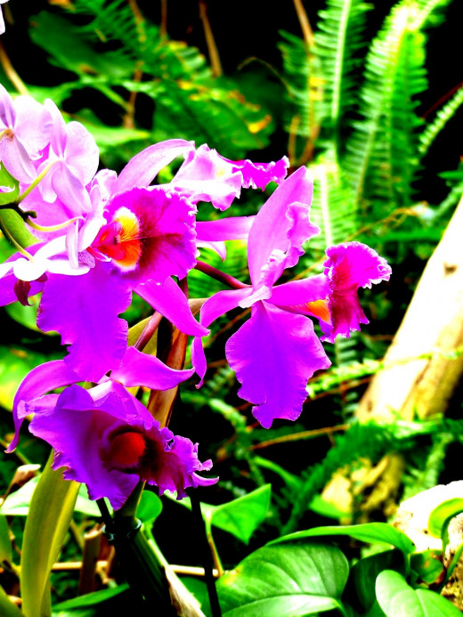 Bright orchids on a calm day