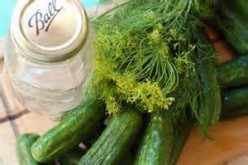 Dill Pickles (canned)