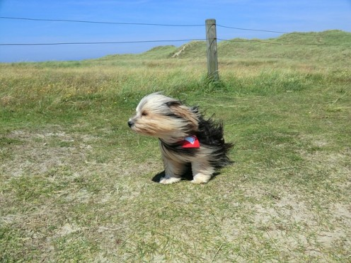 It was surely windy, but the dogs still had to go out occasionally.