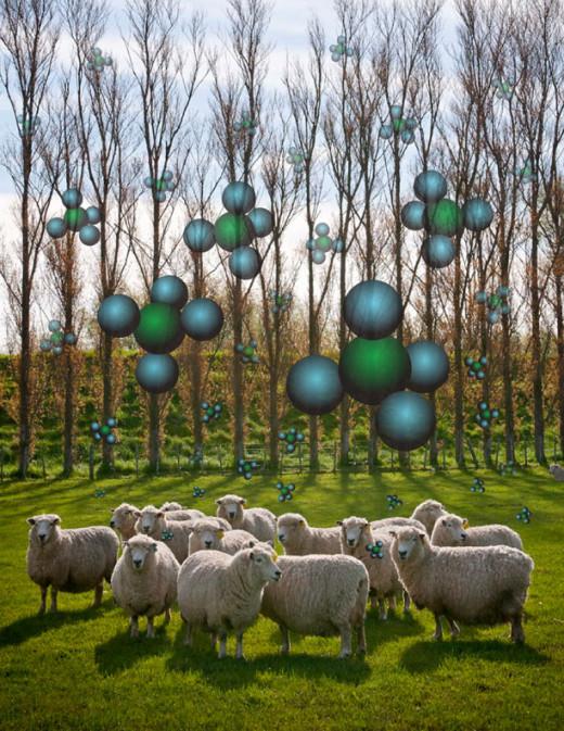 Sheep releasing methane