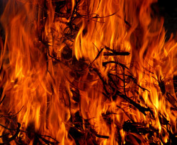 Organic Poetry: The Living Fire, by Edward Hirsch