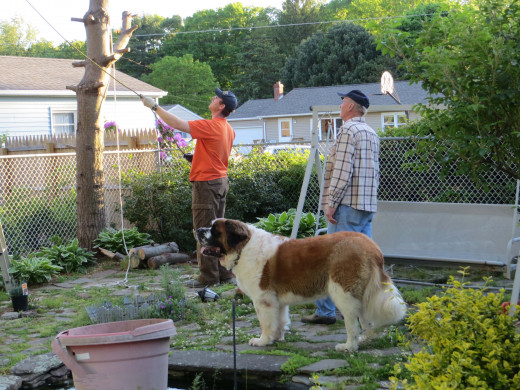 Memories here.  The man in the orange shirt, a friend and neighbor, has since moved away.  The beautiful St. Bernard has since passed away and surprisingly cutting down the tree was an event filled with laughs.