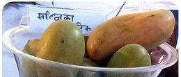 Mango variety Mallika