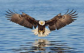 ... nobility, pride ... courage ...