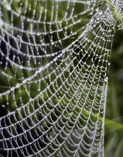 Photographs of a Spider's Web