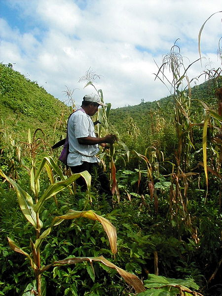 Majority of Indian labor force is engaged in agriculture