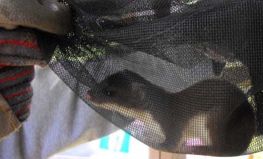 Here is the cute little Mommy before her release