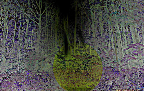 A day riding the backwoods. Light was hitting the center of a group of trees. It is awesome regular. I colorized this, and inverted colors with Picassa. The images visible were not added.