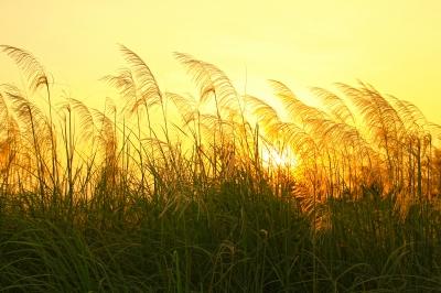 Image courtesy of pisitphoto at