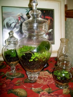 How to Plant Easy Terrariums