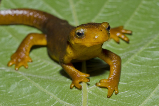 Newts are famous for not having a great deal of political understanding ;-)