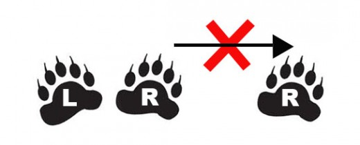 Instructions for Bear Dancing: the Shuffle