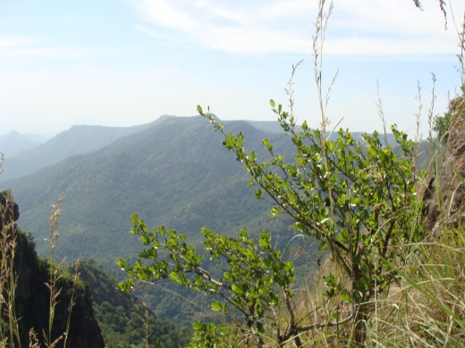 THE QUEEN OF MOUNTAINS ' - KODAIKANAL View 5