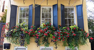 Traditional window boxes.