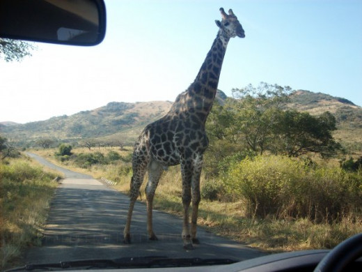 A picture I took while in South Africa with my family, when I was still in secondary school