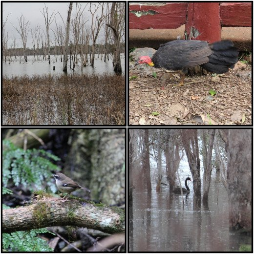 Various scenes from the Wooroolin Wetlands