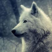Kalia Stormborn profile image