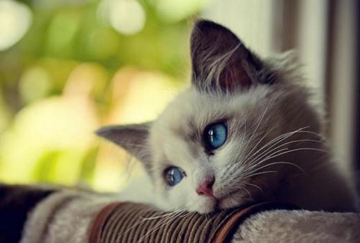 "A kitten experiencing ""Saudade"""