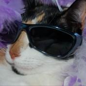 kitkat105 profile image