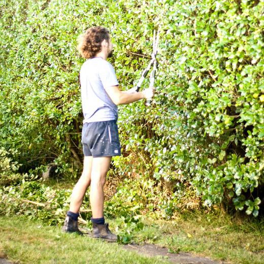 cutting shrubs