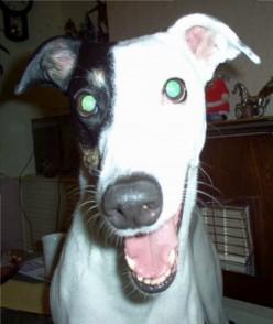 How a Microchip Saved a Stolen Dog's Life