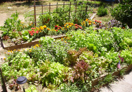 Backyard gardens are the feature many buyers seek.