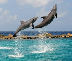 Dolphins: Preserve, Protect and the Basics